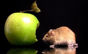 Картинка Яблоко, Мышка, Укус