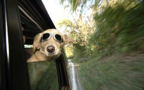 Картинка dog, train, railway, funny, wind, human, ears, spectacles