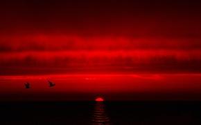 Обои море, птицы, небо, облака, закат