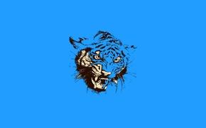 Картинка кошка, тигр, животное, пасть, оскал