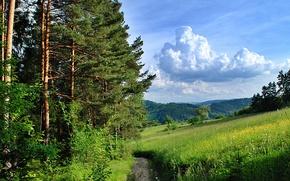 Картинка поле, лес, горы, природа