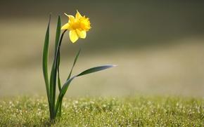 цветы,  трава, жёлтый, природа обои