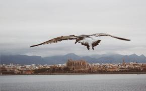 Картинка sky, sea, seascape, freedom, clouds, Spain, seaside, seagull, church, Palma, Catedral-Basílica de Santa María, Maiorca
