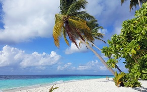 Картинка пляж, тропики, пальмы, океан, остров, экзотика, белый песок, Мaldives