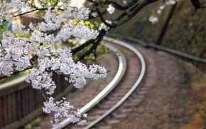 Картинка макро, цветы, ветки, дерево, Япония, размытость, сакура, железная дорога