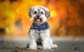 Картинка животное, собака, пёс, боке