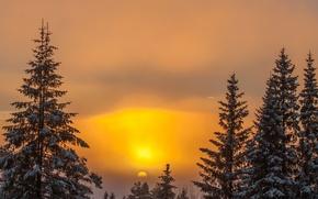 Картинка зима, небо, солнце, снег, деревья, закат, природа, фон, дерево, обои, wallpaper, широкоформатные, background, полноэкранные, HD ...