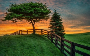 Картинка поле, лето, пейзаж, закат, дерево, забор