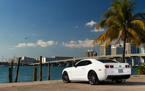 Картинка белый, небо, мост, город, пальма, побережье, чайка, Chevrolet, Camaro, white, шевроле, мускул кар, небоскрёбы, задняя …