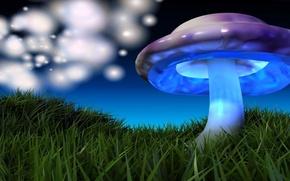 Картинка зеленая трава, Картинка, разноцветный гриб