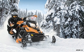 Картинка Деревья, Снег, Лес, Снегоход, Snowmobile, Ski-Doo