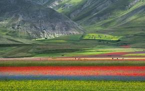 Картинка поле, цветы, горы, природа, маки, луг, Италия