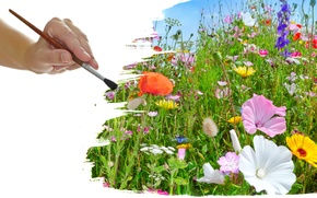 Картинка трава, кисть, полевые цветы