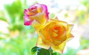 Обои красота, макро, цвета, лепестки, фон, розы