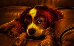 Картинка взгляд, диван, огонь, собака, щенок