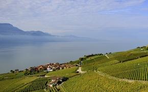 Картинка море, поле, небо, облака, горы, озеро, дома, склон, виноградник