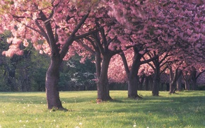 Картинка лес, трава, деревья, цветы, поляна, красота, весна