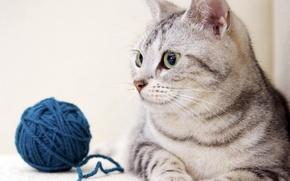 Картинка кошка, кот, взгляд, синий, клубок, игра