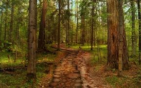 Обои лето, дорога, деревья, лес, природа
