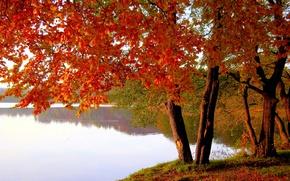 Картинка осень, листья, деревья, озеро, пруд, парк, багрянец