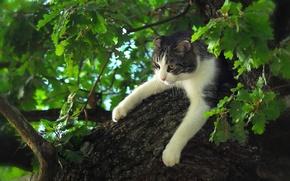 Обои кошка, дерево, дуб, на дереве, лапы, кот