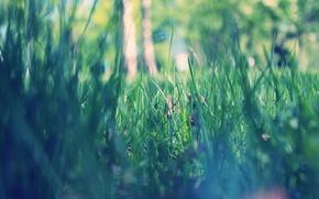 Обои утро, макро, парк, зеленая, трава, весна