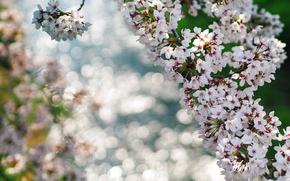 Картинка макро, цветы, ветки, блики, весна