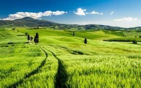 Обои Tuscany, Italy, поле, пейзаж