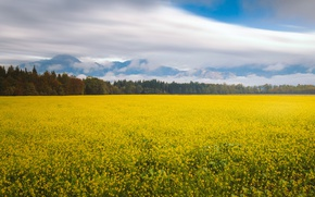 Картинка flowers, autumn, mountains, clouds, countryside, peaceful, flowers field, field of gold, yellow field