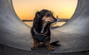 Картинка взгляд, друг, Tube Dog