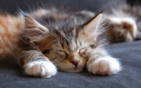 Картинка морда, лапы, спит, уши, котёнок