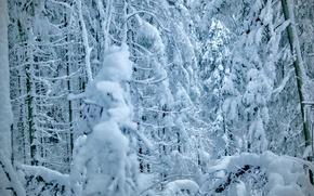Картинка зима, лес, снег, деревья, елки, ели, сосны, winter, snow, tree, pine
