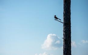 Картинка небо, дерево, птица