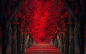 Картинка деревья, аллея, красные листья