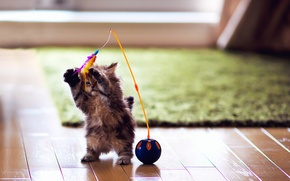 Обои кошка, игрушка, перья, игра, Daisy, ковер, котенок, паркет, шарик, Ben Torode