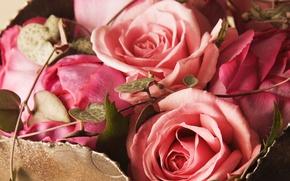 Картинка розы, букет, розовые