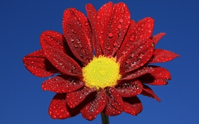 Картинка цветок, небо, вода, капли, роса, лепестки