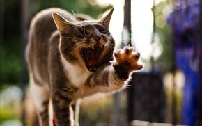 Картинка кошка, поза, лапа, зевает