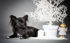 Картинка черный, ангел, щенок