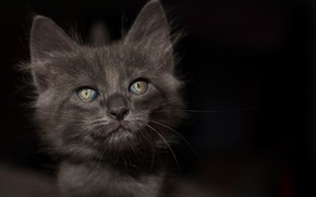 Картинка глаза, взгляд, фон, котёнок
