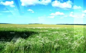 Обои небо, зелень, поле
