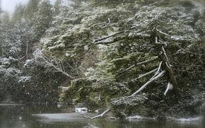 Картинка лес, озеро, снегопад