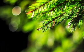 Картинка вода, макро, зеленый, роса, фон, widescreen, обои, елка, капля, ель, размытие, wallpaper, широкоформатные, background, macro, …