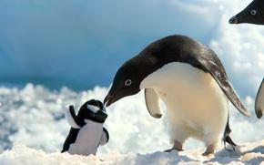 Обои снег, игрушка, пингвин