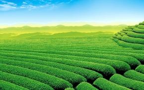 Картинка небо, горы, чай, плантация