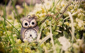 Картинка макро, зеленая, часы, сова, трава, подвеска, кулон