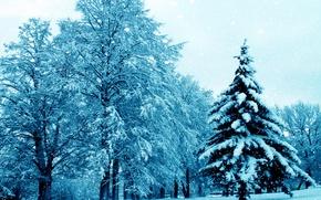 Картинка зима, снег, деревья, природа, елка, nature, winter, snow, tree