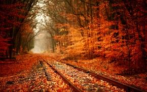 Картинка природа, листва, железная дорога, тил-шифт, рыжая осень