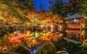 Обои деревья, огни, пруд, парк, отражение, Япония, Токио, Tokyo, Japan, беседка, Otaguro park, Ogikubo