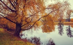 Картинка осень, трава, вода, деревья, отражение, река, желтые